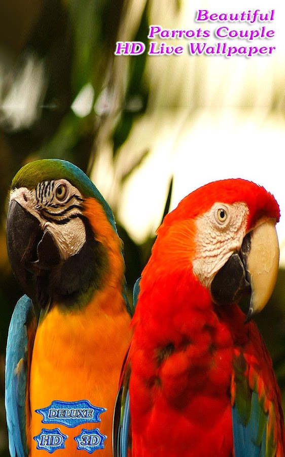 Beautiful Parrots Couple 3D- screenshot