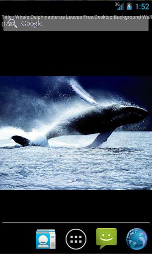 Whales Live Wallpaper Plus