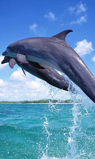 돌고래는 배경 화면 라이브