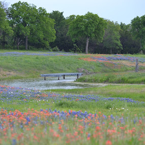 Bluebonnet Field near Gholson, Texas by Cal Johnson - Novices Only Landscapes ( water, nature, texas, bluebonnets, spring,  )