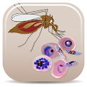 Malaria Vectors