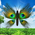 Peacock Butterfly icon