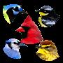 A8 Birds Slot Machine