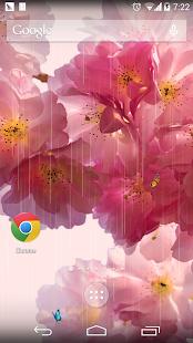 春天繽紛櫻花壁紙