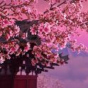 Sakura 3D. Live wallpaper. icon
