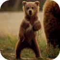 Cute Bear Video Live Wallpaper icon