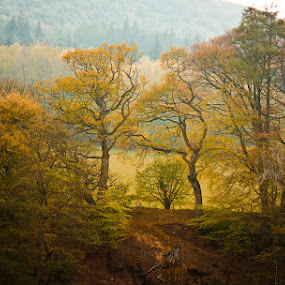 by Keren Woodgyer - Landscapes Forests ( countryside, hills, england )