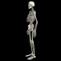 Funny dancing skeletonLWP FREE icon