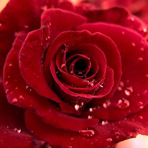 Descargar 3d Love Rose Live Wallpaper Apk última Versión 15