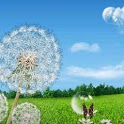 Galaxy S3/S4 Dandelion LWP HD icon