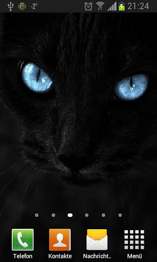 Черные кошки живые обои