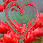 Valentine's Day Live Wallpaper icon
