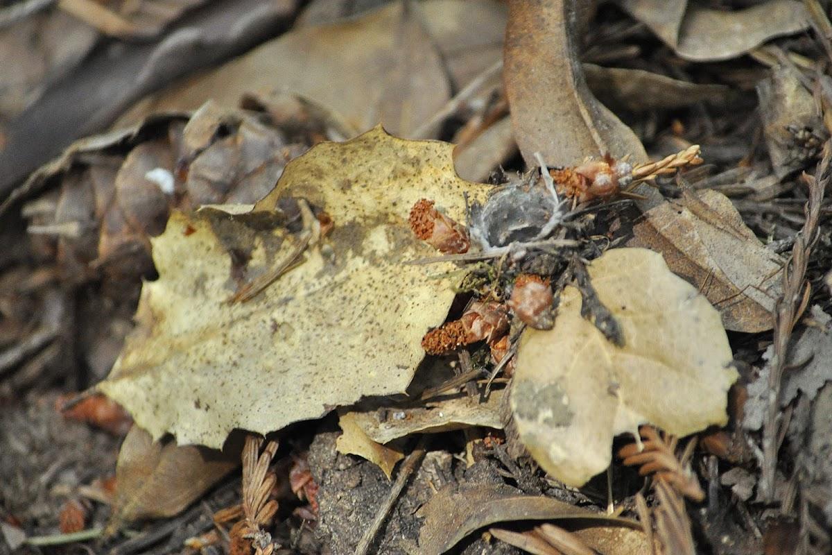 Unknown Spider Burrow