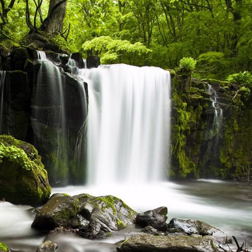 放寬森林 - 大自然的聲音 生活 App LOGO-APP試玩