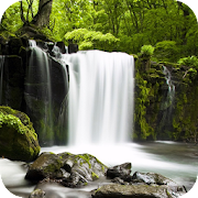 App Relax Forest ~ Nature Sounds APK for Windows Phone