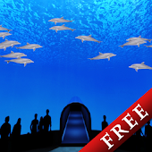 Dolphins World Trial