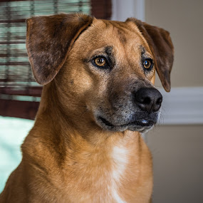 by Michael Last - Animals - Dogs Portraits ( dog portrait, dog )