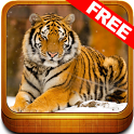 Wonder Animals Zoo Free Game icon