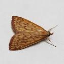 Subfamily Spilomelinae