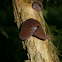 Wood Ear
