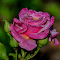 20140608-GB_14_047_filtered.jpg
