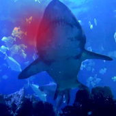 Great White Shark Attack HD