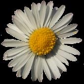 Flower Oracle