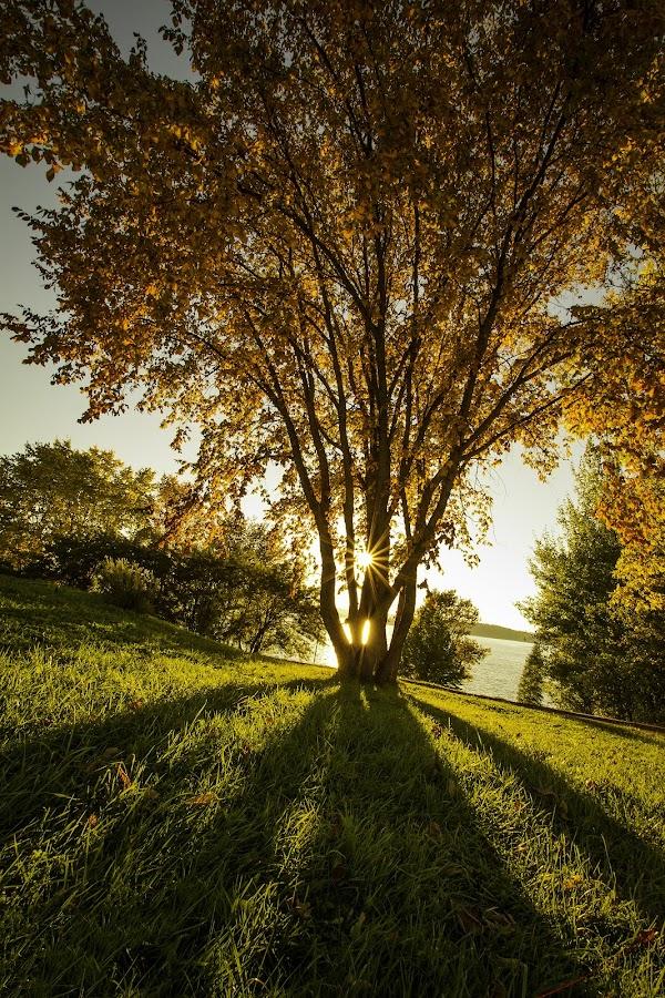 by Andy Perron - Landscapes Sunsets & Sunrises ( orange, tree, shadow, sunset, sun )