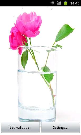玫瑰水16