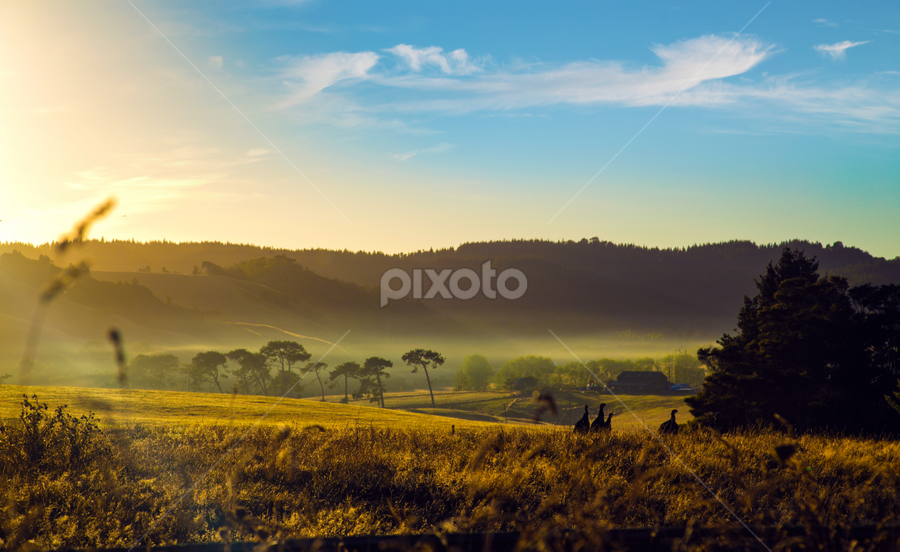 Calm morning mist by Anupam Hatui - Landscapes Prairies, Meadows & Fields ( field, calm, sunrise, landscape, mist )