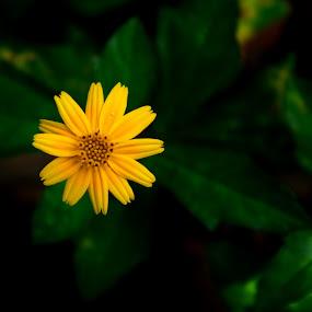 by Subramanya Padubidri - Flowers Flowers in the Wild
