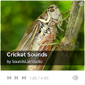 Cricket Sounds icon
