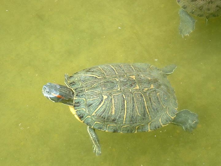 Fotos Gratis Animales - Tortugas