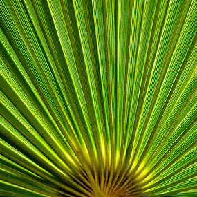 las palmas by Nina Kriznic - Nature Up Close Other plants ( palm, nature, pattern, green, leaves, , vertical lines, pwc, renewal, trees, forests, natural, scenic, relaxing, meditation, the mood factory, mood, emotions, jade, revive, inspirational, earthly )