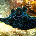 Sea slug/snail