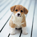 Cute Little Puppies Wallpapers icon