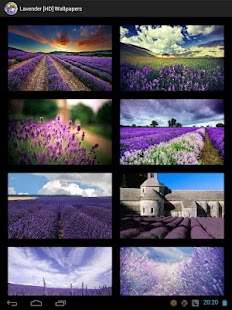 Lavender [HD] Wallpapers - screenshot thumbnail