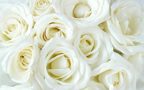 白玫瑰的動態壁紙