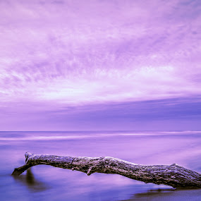 Driftwood by Anna-Lee Nemchek Cappaert - Landscapes Beaches ( water, driftwood, lake michigan, sunset, twilight, beach )
