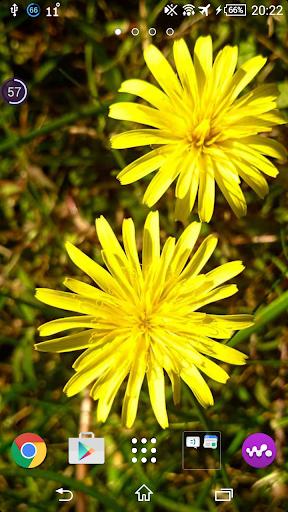 والپیپرهای گلهای بهاری