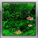 Fish Tank 3d Live Wallpaper logo