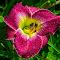 P_MG_6236.jpg