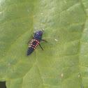 Harlequin ladybird larve??