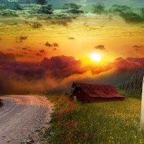Field of Flowers by Alan Evans - Wedding Bride & Groom ( field, melbourne wedding photographer, sunset, wedding day, wedding, bride and groom, wedding photogrpahy, aj photogrpahy, flowers, bride, marriage, groom,  )