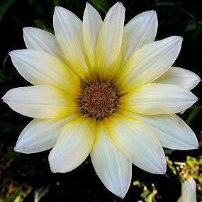 white flower by Zeljko Jelavic - Novices Only Flowers & Plants (  )