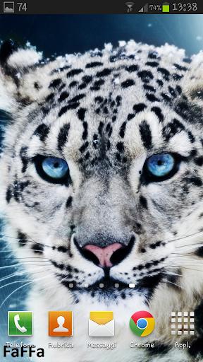 【免費個人化App】Feline Live Wallpaper HD-APP點子