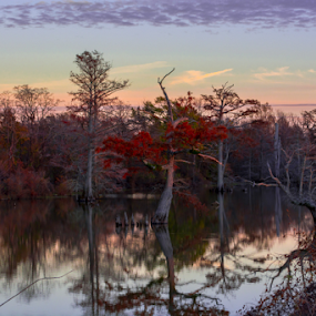red tree by Richard Wright - Landscapes Waterscapes ( water, tree, delta, trees,  )