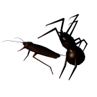 Cockroach And Spider Lite icon