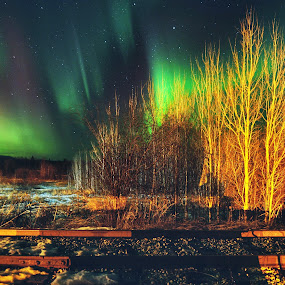 Tracking Aurora by Charles Adam - Landscapes Starscapes ( colourful, cold, magical, snow, aurora borealis, aurora, trees, train, forest, night, tracks, colours )