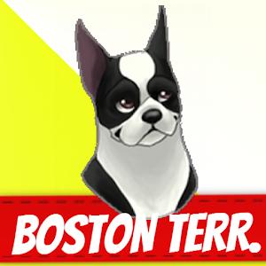 Boston local phone dating 5